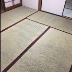 畳一面に青カビ発生!3種類の防カビ対策を検討