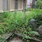 草むしり中にハチを発見!駆除はどうすればいい?